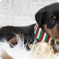 Adopt A Pet :: 1030 - Aurora, CO