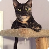 Adopt A Pet :: GRACIE - Brea, CA