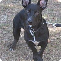 Adopt A Pet :: Max - Voorhees, NJ