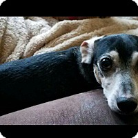 Adopt A Pet :: Patton - Decatur, GA