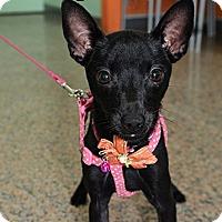 Adopt A Pet :: Daisy - Surrey, BC
