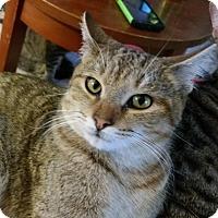 Adopt A Pet :: Red Angry bird - Ocala, FL