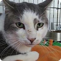 Adopt A Pet :: JO JO! - Owenboro, KY