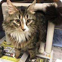 Adopt A Pet :: River (& Stewie) - Arlington, VA