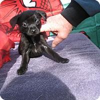 Adopt A Pet :: PEDR - Corning, CA