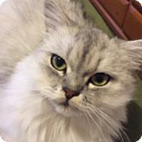 Adopt A Pet :: Precious - Davis, CA