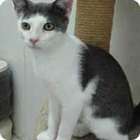 Adopt A Pet :: Bernie - Stuart, VA