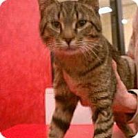 Adopt A Pet :: Quake - Pittstown, NJ