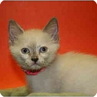 Adopt A Pet :: PATRICIA - SILVER SPRING, MD