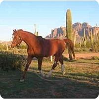 Adopt A Pet :: Jack - Apache Junction, AZ