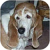 Adopt A Pet :: Frederica - Phoenix, AZ