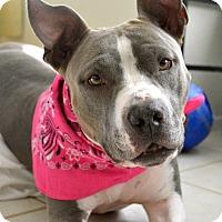 Adopt A Pet :: Juno - La Habra, CA