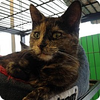 Adopt A Pet :: Delilah - Caistor Centre, ON