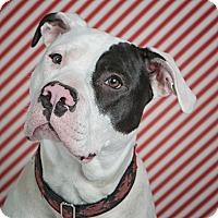 Adopt A Pet :: Oakley - Des Peres, MO
