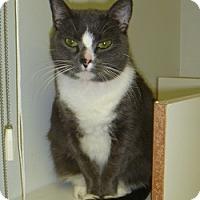 Adopt A Pet :: Summer Lynn - Hamburg, NY