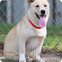 Adopt A Pet :: Brad Pitt - Glastonbury, CT