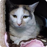 Adopt A Pet :: Winifred - Edwardsville, IL