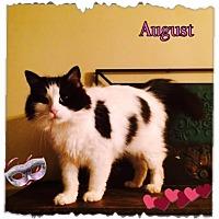 Adopt A Pet :: August - Harrisburg, NC