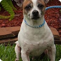 Adopt A Pet :: Pistachio - Vancouver, BC