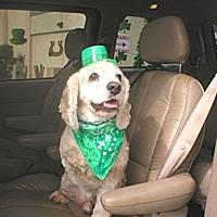 Adopt A Pet :: Carter - CCR's Mascot - Kannapolis, NC