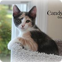 Adopt A Pet :: Candy - Glen Mills, PA