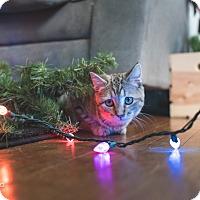 Adopt A Pet :: Sassy - Columbus, OH