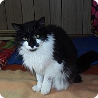 Adopt A Pet :: Sylvester - Shelby, MI