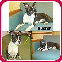 Adopt A Pet :: BUSTER - Malvern, AR