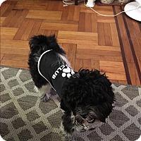 Adopt A Pet :: Comet - Long Beach, NY