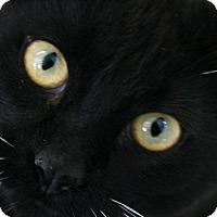 Adopt A Pet :: Queen VALENTINE'S SPECIAL! 50% - Republic, WA