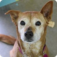 Adopt A Pet :: Goldie - Pontiac, MI