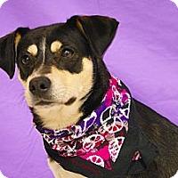 Adopt A Pet :: Libby - Princeton, KY