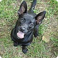 Adopt A Pet :: Cara - Hancock, MI