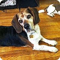 Adopt A Pet :: Duncan - Novi, MI