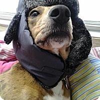 Adopt A Pet :: Moondoggy (nee Braut) - Marietta, GA