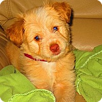 Adopt A Pet :: Simba - Culver City, CA