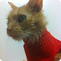 Adopt A Pet :: Pumpkin (Special Story!) - Arlington, VA