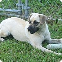 Adopt A Pet :: Pixie - Manning, SC