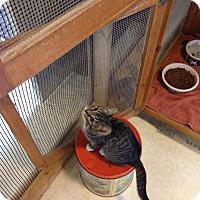 Adopt A Pet :: Julia - Lancaster, MA