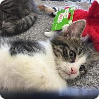 Adopt A Pet :: Riley - East Hanover, NJ