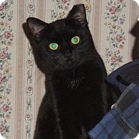 Adopt A Pet :: BonBon - East Brunswick, NJ
