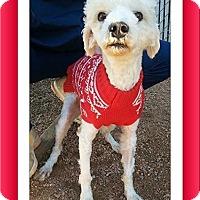 Adopt A Pet :: Adopted!! Crockett - LA - Tulsa, OK