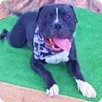 Adopt A Pet :: McDaddy, most lovable boy! - Snohomish, WA