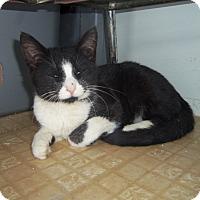 Adopt A Pet :: TUX - Medford, WI
