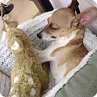 Adopt A Pet :: Prancer - Oakland, CA