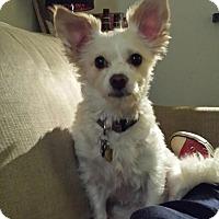Adopt A Pet :: Jelly - Studio City, CA