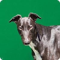 Adopt A Pet :: Baby - Woodinville, WA