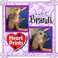Adopt A Pet :: Brandi - Leduc, AB