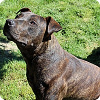 Adopt A Pet :: Petey - Lodi, CA