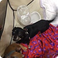 Adopt A Pet :: Tipsy - S. Pasedena, FL